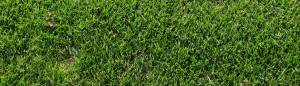 Good Looking Grass