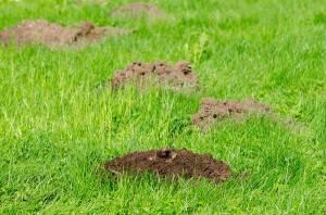 Multiple Mole Hills