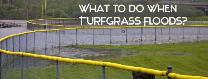 What-To-Do-When-Turfgrass-Floods
