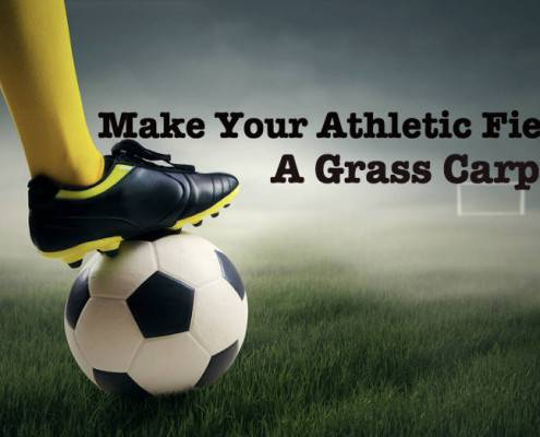 Make Your Athletic Field A Grass Carpet