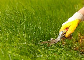 Proper Turf Care Will Prevent Excessive Recovering of Turf Later On2