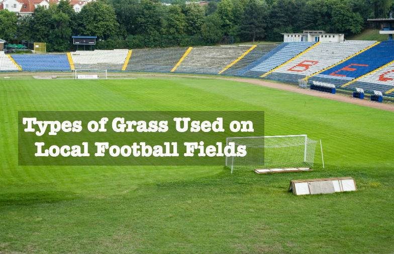 green grass football field animation typesofgrassusedonlocalfootballfieldsjpg types of grass used on local football fields