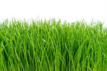 Top Dressing Uneven Lawns