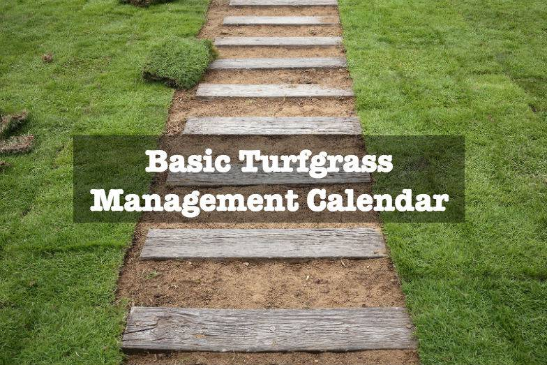 Turf Management how to rigth
