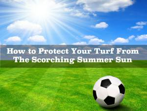 How to Protect Your Turf From The Scorching Summer Sun`