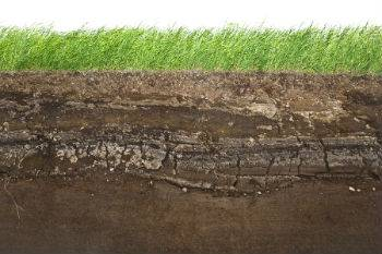 Insect and Disease Prevention in Turf Grasses