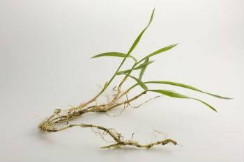 Crabgrass Pre-emergent Products1