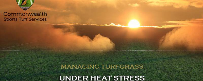 MANAGING TURFGRASS UNDER HEAT STRESS