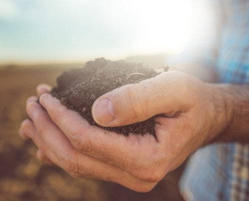 sports turf soil study