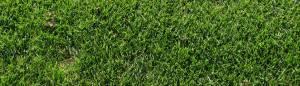 Good Looking Grass