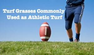 Turfgrasses Commonly Used as Athletic Turf