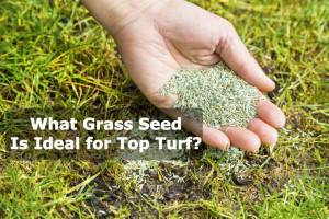 What Grass Seed is Ideal for Top Turf?