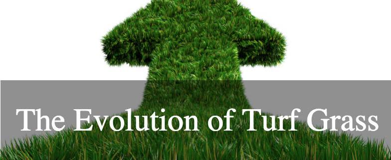 The Evolution of Turf Grass