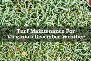 Turf Maintenance For Virginia's December Weather