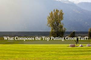 What Composes the Top Putting Green Turf?